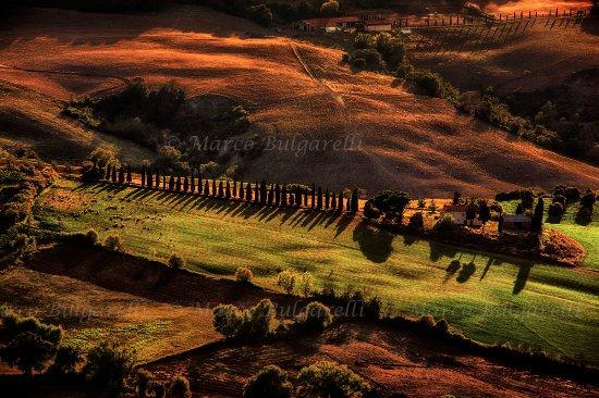 Torrita di Siena, Italia: Montepulciano