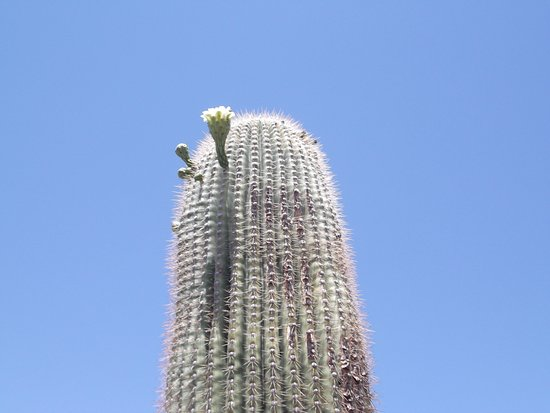 Tucson Botanical Gardens Az Top Tips Before You Go Tripadvisor