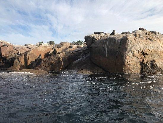 Port Lincoln, Australia: photo3.jpg