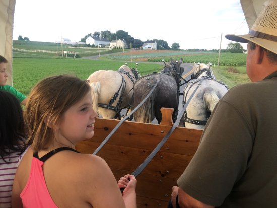 Denver, PA: All the children have an opportunity to help the driver drive the three draft horse team.