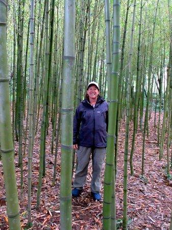 Trsteno, Croacia: Bamboo forest