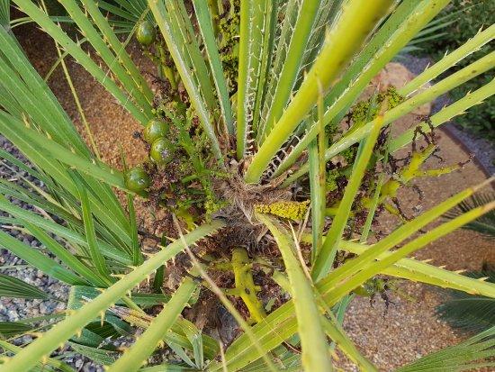 Planten In Tuin : De planten in de tuin bild von tui blue falesia olhos de agua
