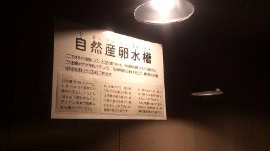 千歳市, 北海道, ミニ孵化水槽もあります