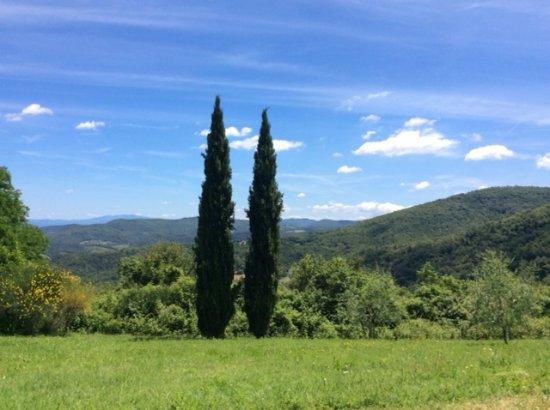 Agriturismo Casa degli Ulivi: Uitzicht