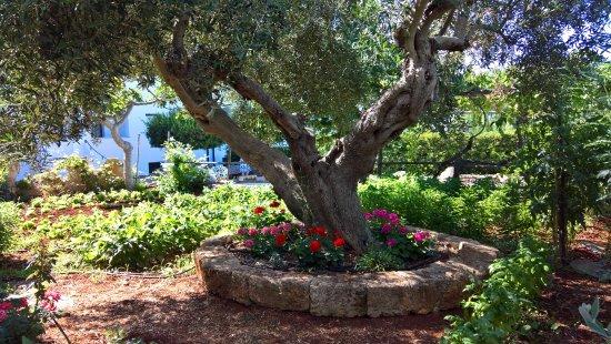 Marina San Gregorio, Italia: The garden