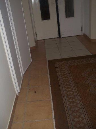 El Mouradi El Menzah: cafard écrasé dans le couloirs des chambres!