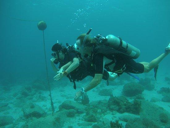 """Pointe-Noire, Guadeloupe: Erste """"Schritte"""" unter Wasser"""