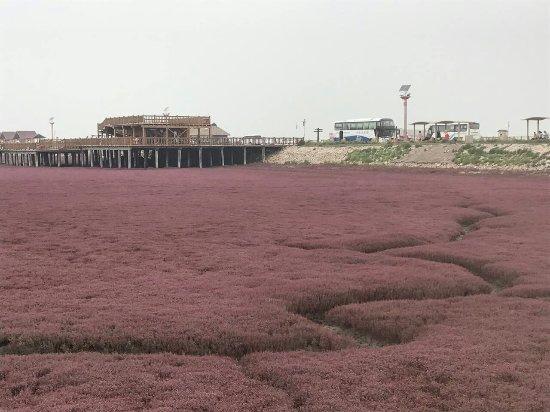 Honghai Beach Scenic Resort: red beach and boardwalk