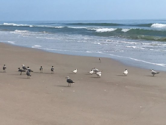 Canaveral National Seashore: Gulla and terns on the beach