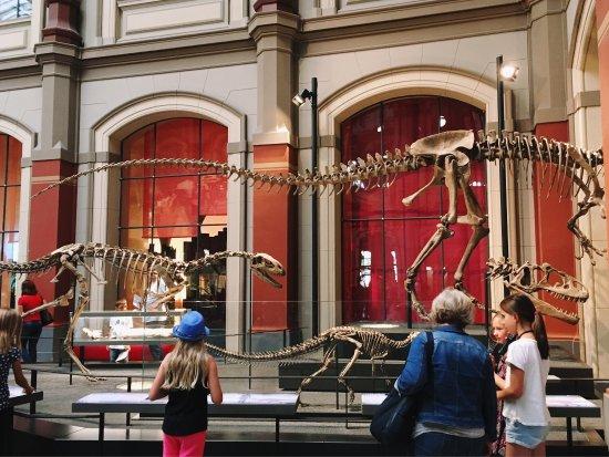 Museum für Naturkunde: photo3.jpg