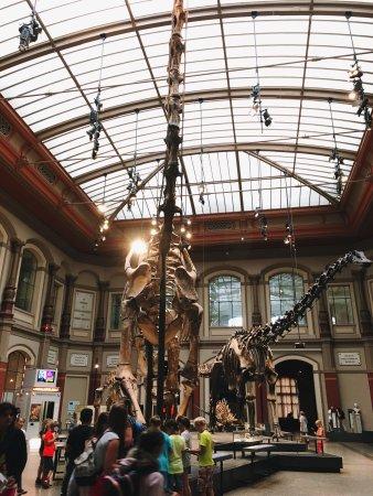 Museum für Naturkunde: photo4.jpg