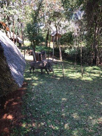 Lokuthula Lodges: photo3.jpg