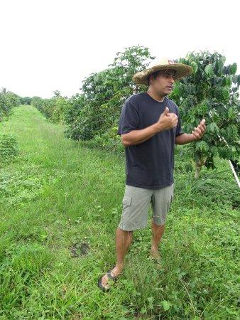 Honaunau, Hawái: Pele Plantations