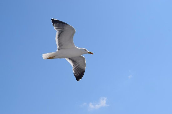 Bowness-on-Windermere, UK: Seagull waiting for u2 throw crisps & tit bits to it