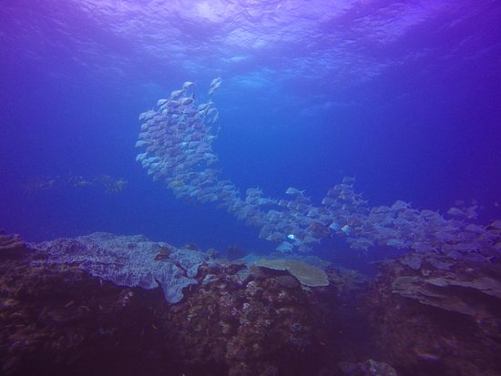 Huge Schools of fish found at Antons Reef - 2 Mile Sodwana Bay