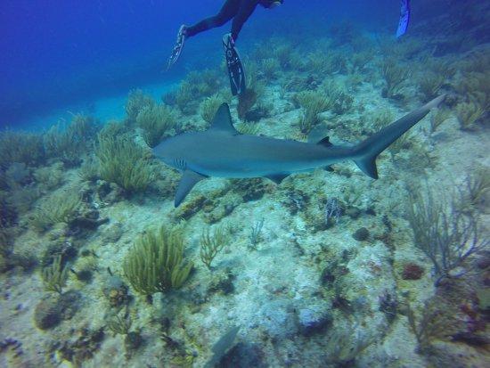 Simpson Bay, St. Martin/St. Maarten: sharks! :)