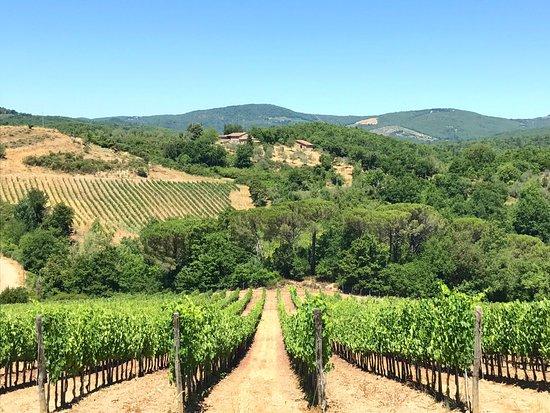 Vagliagli, Italy: Dievole vineyards
