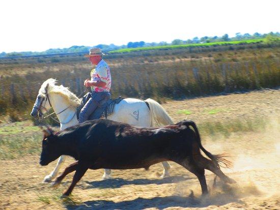 Calvisson, France: visite d'une manade en Camargue