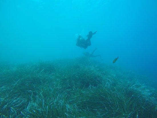 Aegean Divers Dive Center - Day Excursions: Diving Caldera Beach