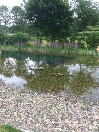 Bucknell, UK: The natural swimming pond
