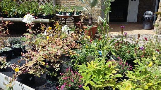Myddelton House Gardens : Plants for sale at Myddleton House!
