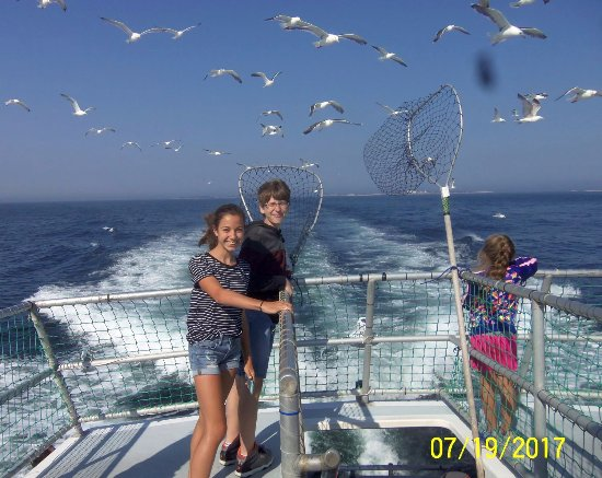 Seabrook, Nueva Hampshire: Gulls getting fed fish scraps on the way back to port
