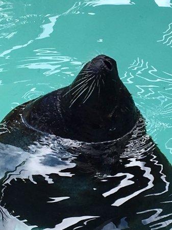 Hamilton, Bermudy: outside seal