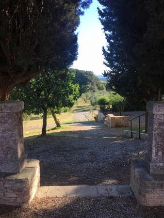 Agriturismo Castel di Pugna: way to the olive's trees