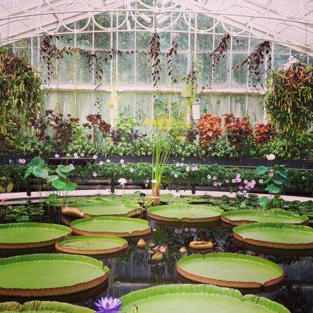 Kew, UK: Waterlily House.