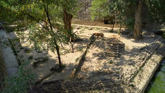 Nikolaev Zoo: Тигр