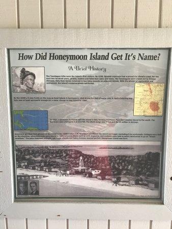 Honeymoon Island State Park: photo4.jpg