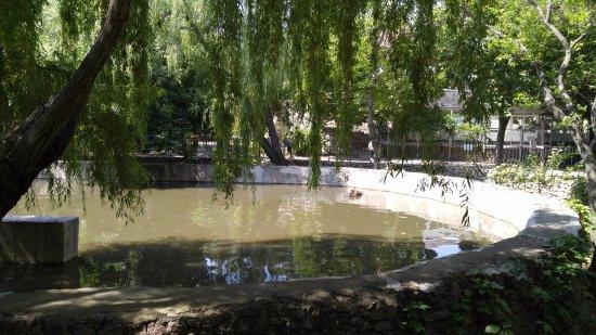 Nikolaev Zoo: Бегимот