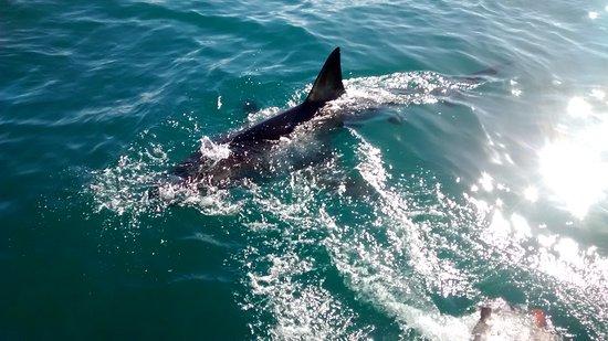 Mossel Bay, Güney Afrika: IMG_20170723_142040521_large.jpg