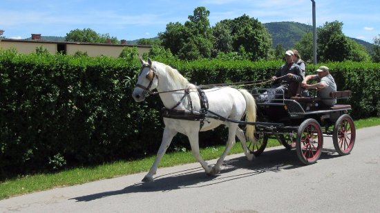 Lipica, Slovenia: Rides available for more money
