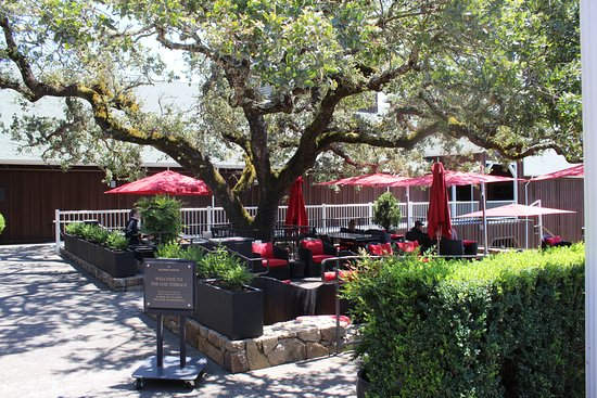 Mumm Napa: The terrace built around the old oak tree