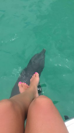 Wild About Dolphins: Relaxing with the dolphins