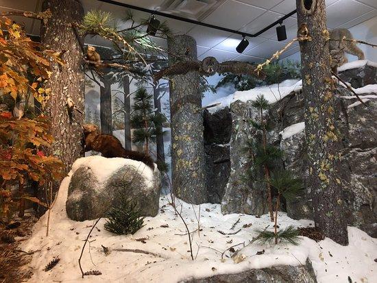 Ely, MN: História da natureza
