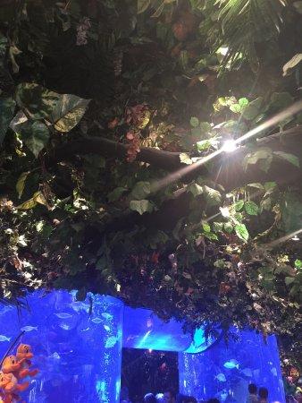 Rainforest Cafe: photo0.jpg