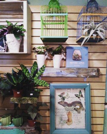 Mount Dora, FL: unique gifts