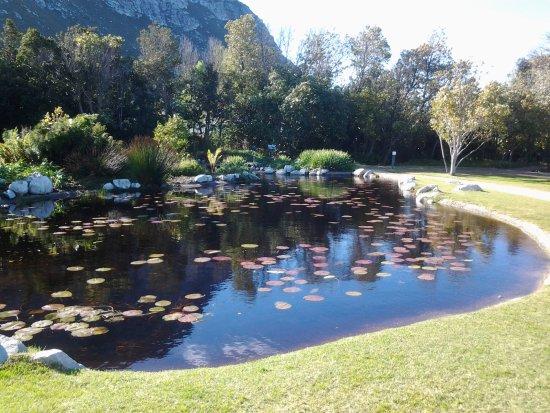 Harold Porter National Botanical Gardens: Pond near Red Disa restaurant