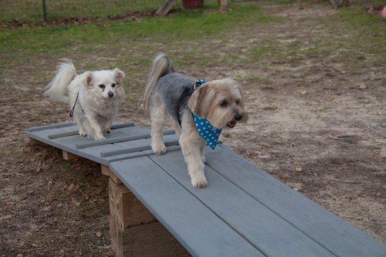Milledgeville, GA: Dog Park