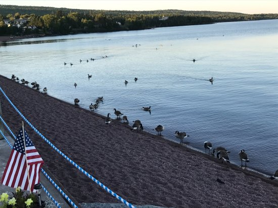 The Shoreline Inn: The geese come in at night.
