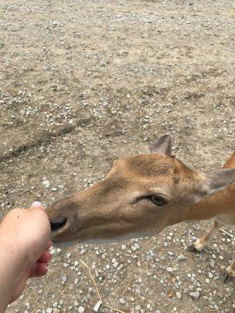Lagoon Deer Park: photo0.jpg