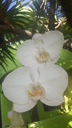Bamboo Flat: Orquídeas y otras variedades de flores y plantas por todas partes.