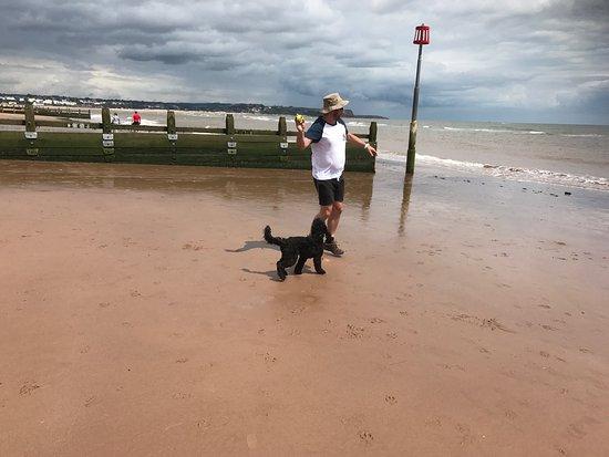 Dog Friendly Hotels Near Dawlish