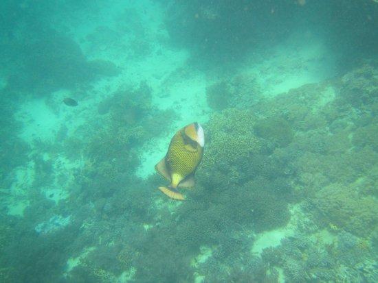 Kinasi Lodge: Titan Triggerfish
