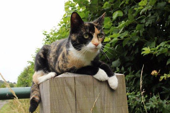 waterrow cat