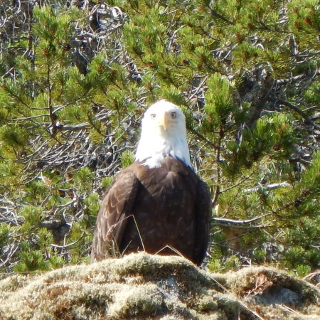 Heriot Bay, Canada: He eyed us as we passed under his perch. Lots of nature to enjoy!