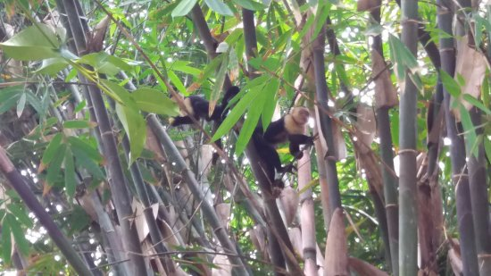 Finca Exotica Ecolodge : Monkeys in the garden