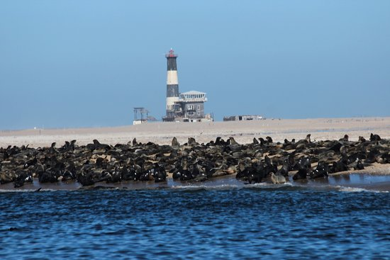 Seal Colony Walvis Bay